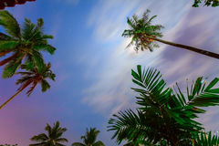 Palm trees and colorful sky Stock Photos