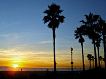 Palm trees in colorful sunset. In Huntington Beach, California Stock Images
