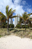 Palm trees condo on beach. Palm trees and dune grass on sandy beach with condominium buildings in background Stock Photos