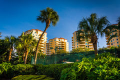 Palm trees and condo towers in Saint Petersburg, Florida. Royalty Free Stock Images