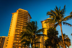 Palm trees and condo towers in Singer Island, Florida. Royalty Free Stock Image