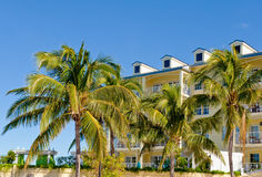 Palm trees and condominiums Stock Photography