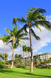 Palm trees and condos, Maui. Palm trees on Maui along the Kaanapli beach front walking path. Luxury condos on the left Royalty Free Stock Image