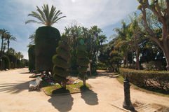 Palm trees and conifers in Cadiz, midday Stock Photo