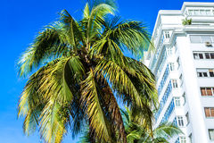 Palm trees in Copacabana beach in Rio de Janeiro, Brazil Royalty Free Stock Images