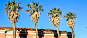 Palm trees. Four coconut palm trees equally spaced beside a building with red roof in Corfu Island, Greece, blue sky background Stock Photos
