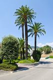 Palm trees on the Cote d'Azur Stock Images