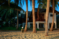 Palm trees and cottages Stock Images