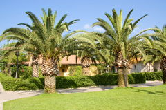 Palm trees. In the countryside Royalty Free Stock Image