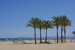 Palm trees on crowdy Cullera beach. Tall palm trees on crowd Cullera beach in Spain, with peoples resting on the shadow royalty free stock image