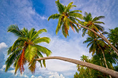 Palm trees. Palm crown over the sea stock photos
