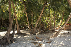Palm trees at Curieuse Island in Indian Ocean. Stock Photos