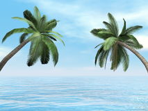 Palm trees - 3D render Royalty Free Stock Image