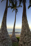 Palm trees at dawn on Ulua Beach, Maui, Hawaii Stock Photos