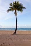 Palm trees at dawn in Waikiki royalty free stock photos