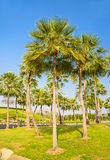 Palm trees decorate in garden Royalty Free Stock Photos