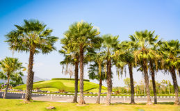 Palm trees decorate in garden Royalty Free Stock Image
