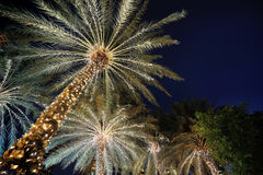 Palm trees decorated Royalty Free Stock Photography