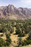 Palm trees in the desert. Near Tafraut, Morocco Stock Photo