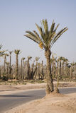 Palm trees by desert highway Stock Photography