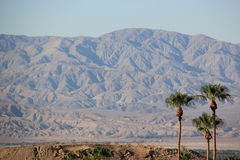 Palm Trees with Desert Mountain. In background Stock Image
