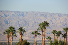 Palm Trees and Desert Mountain Royalty Free Stock Photography
