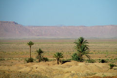 Palm trees in desert mountains Royalty Free Stock Photos