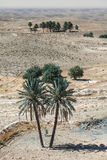 Palm trees in desert Sahara Royalty Free Stock Image