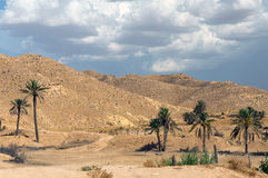 Palm trees in desert. Scenic view of palm trees in desert with cloudscape background Stock Image