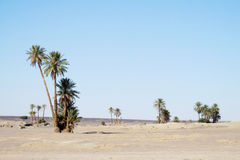 Palm trees in desert Stock Image