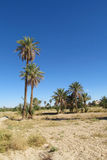 Palm trees in desert stock photography