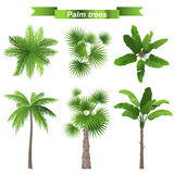 Palm trees. 3 different palm trees - top and front view vector illustration