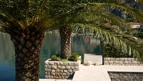 Palm trees on the docks in the Bay of Kotor. Montenegro stock video footage