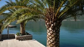 Palm trees on the docks in the Bay of Kotor. Montenegro stock video