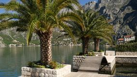 Palm trees on the docks in the Bay of Kotor. Montenegro stock footage