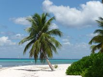Palm trees in the Dominican Republic. Lonley Palm trees beach in a nature reserve called saona in the Dominican Republic Stock Images
