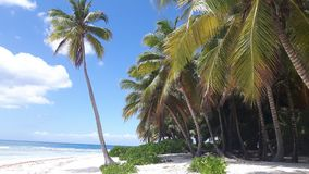 Palm trees in the Dominican Republic. Lonley Palm trees beach in a nature reserve called saona in the Dominican Republic Stock Image
