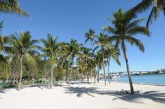 Palm Trees in Downtown Miami Royalty Free Stock Photos