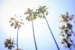 Palm trees. A dreamlike scene of palmtrees against the sun Stock Image