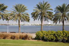 Palm Trees at Dubai Creek Royalty Free Stock Images