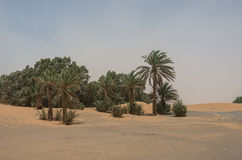 Palm trees and dune in Merzouga village near sahara Erg Chebbi Stock Images