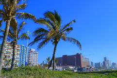 Palm Trees on Durban Sea Front, South Africa Royalty Free Stock Images
