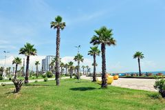 Palm Trees in Durres, Albania. Palm trees along park area in Durres harbour, Albania. Vacation Destination in Balkan Stock Photos