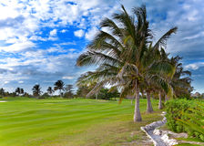 Palm trees on the edge field golf Royalty Free Stock Images