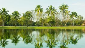 Palm trees on the edge of the pond. Beautiful reflections in the water. Video 1080p - Palm trees on the edge of the pond. Beautiful reflections in the water stock footage