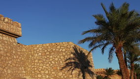 Palm trees in Egypt against blue sky. Beautiful furry palm trees in the Egyptian desert in the background of an old building stock footage