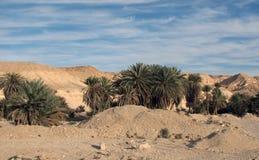Palm Trees on Elim, Egypt Stock Image