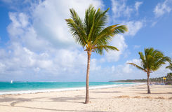 Palm trees on empty beach with white sand. Palm trees grow on empty sandy beach. Coast of Atlantic ocean, Dominican republic Royalty Free Stock Images