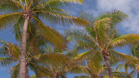 Palm trees entering the scene stock footage