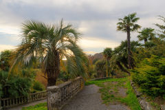 Palm trees in the evening Royalty Free Stock Photo